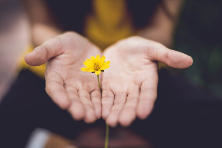 A person cups a flower in their hands